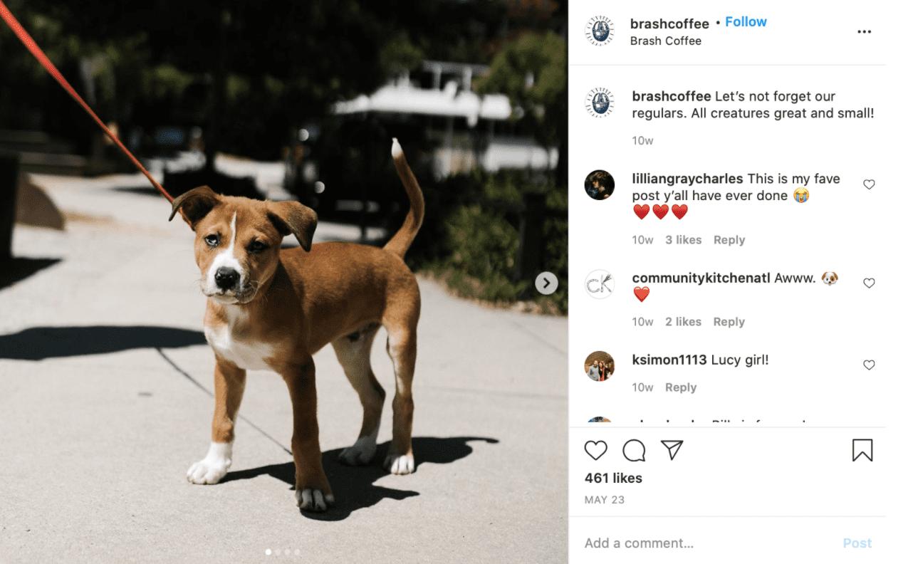 Best Coffee Shop Instagram Accounts brash coffee